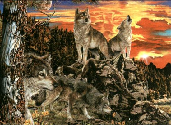 2665l2u-hidden-wolves.jpg