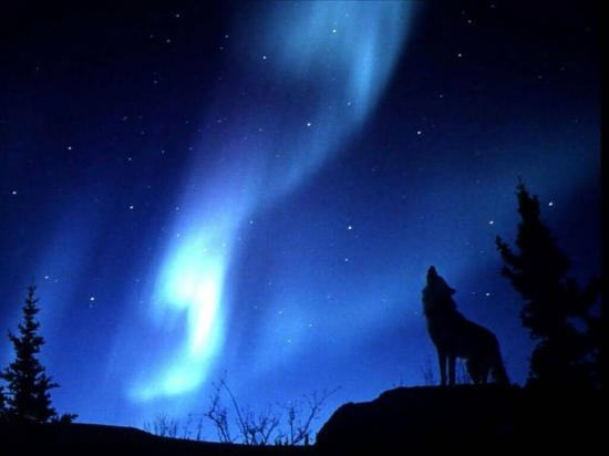 3ue354u-evening_howl.jpg